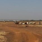 Savannah in Niger now